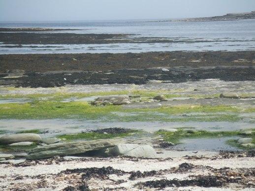 Papa Westray shore